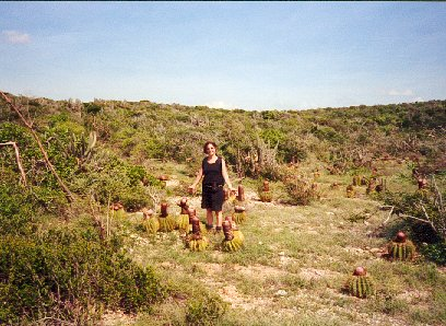 cacti Puerto Rico