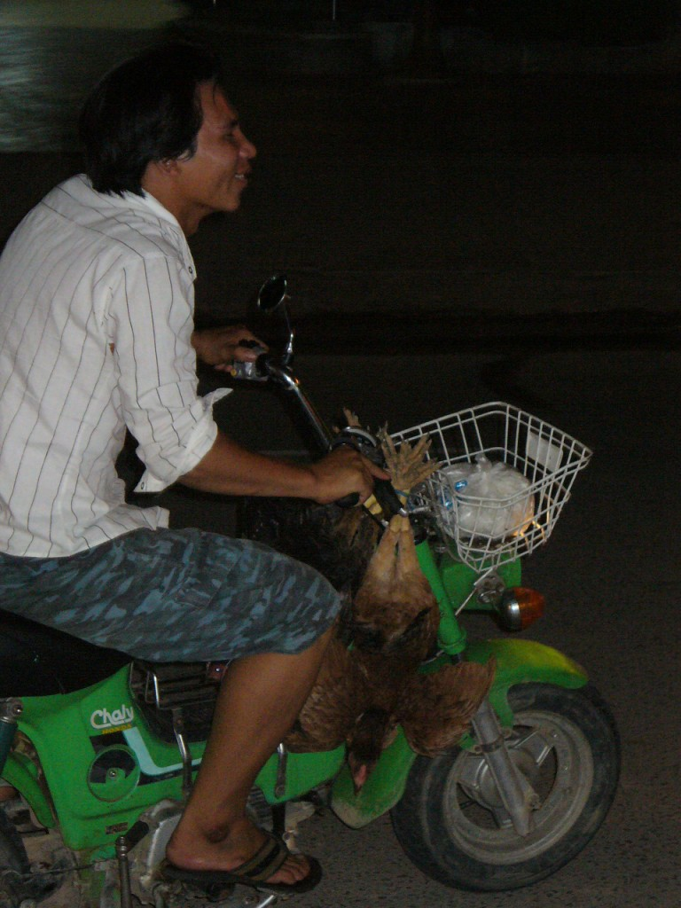 Chickens on motorcycle