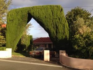 Hedge, Hobart, Tasmania, Australia