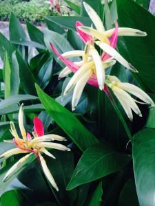Closer flowers
